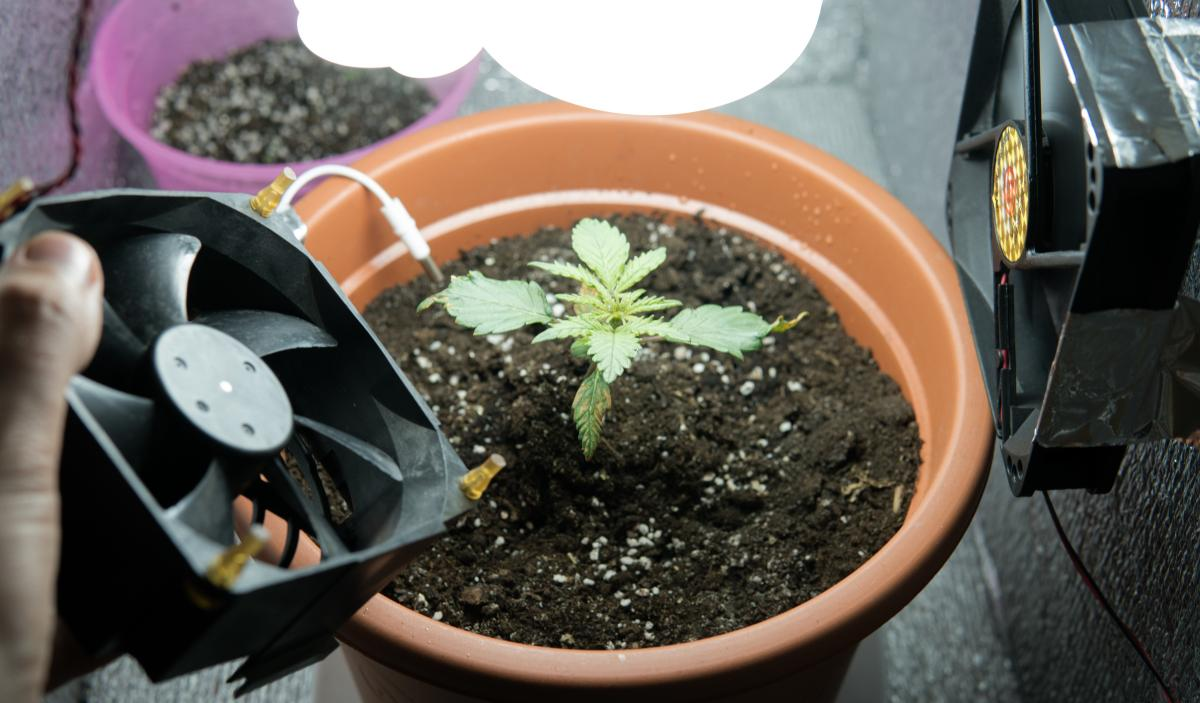 A potted cannabis plant is surrounded by equipment for growing marijuana indoors.