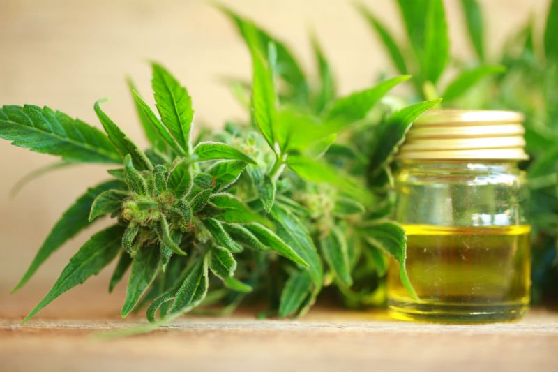 This Doctor Is Distilling Down The Facts About CBD Oil   PotNetwork