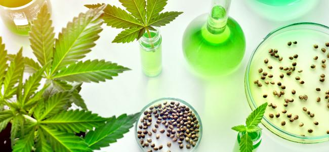 An image of cannabis leaves, testing beakers filled with green liquid, and two small trays containing cannabis seeds is shown.