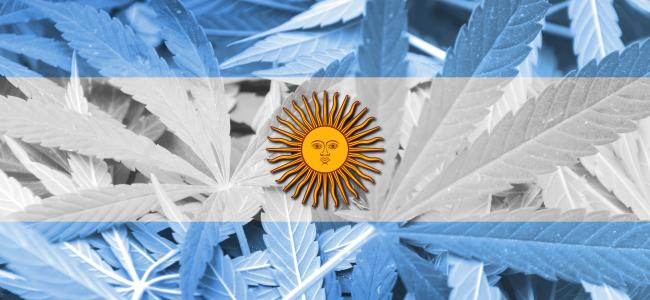 An image of the Argentinian flag comprised of cannabis leaves with a sun in the center is shown.