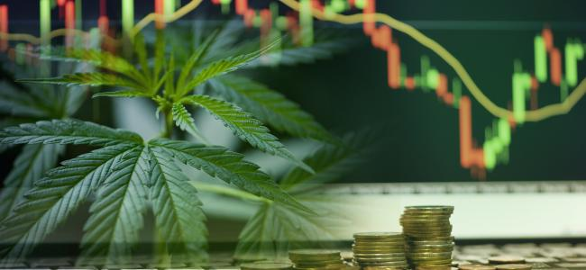 Marijuana stocks weekly investor roundup: Analysis of the week's most important events in the cannabis industry (June 15)