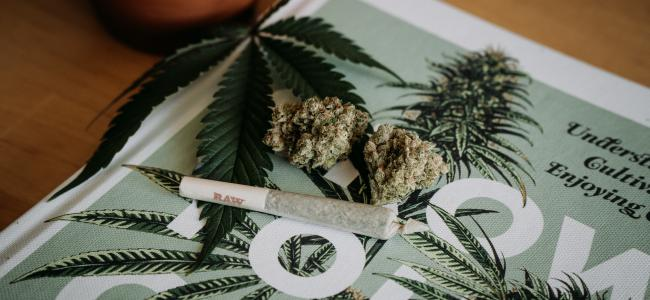 Cannabis news and notes: Today in weed