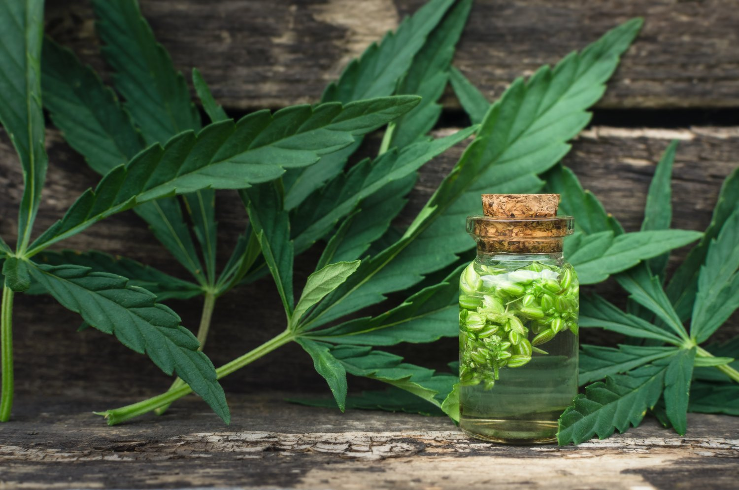 New report states CBD oil fuels growth of the cannabis