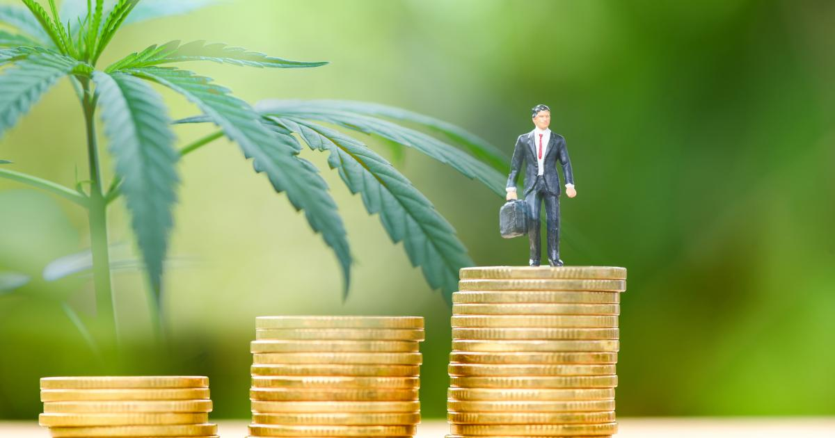 These are the pot stocks to watch when it comes to the